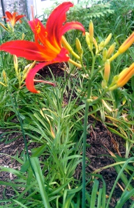 Purrty flower